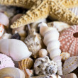 Shell collection — Stock Photo #2393658