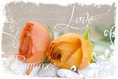 Flores de ranunculus — Foto de Stock