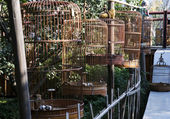 Bird cages in china — Stock Photo