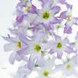 Pretty seasonal flowers — Stock Photo