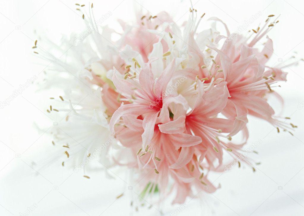 Резеда цветок картинки 8