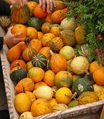 Pumpkins on bavarian market — Stock Photo
