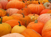 Pumpkins on bavarian market — Stock Photo