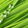 Stock Photo: Drops on grass