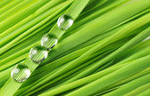 Drops on a grass — Stock Photo