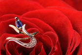 Ring in a red rose — Stock Photo