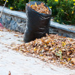 Stock Photo: Cleaning of autumn leaves