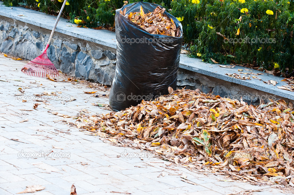 Cleaning of autumn leaves. A bag with fallen down leaves — Stock Photo #2635797