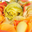 Rose background — Stock Photo #2641649