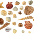 Set of sea cockleshells — Stock Photo #2641987