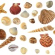 Set of sea cockleshells - Stock Photo
