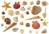 Set of sea cockleshells — Zdjęcie stockowe