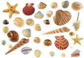 Zestaw cockleshells morze — Zdjęcie stockowe