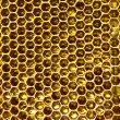 Honey in honeycomb - Stock Photo