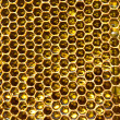 honung i honeycomb — Stockfoto