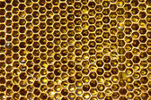 Honey in honeycomb — Stock Photo