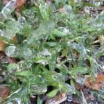 Frozen Grass — Stock Photo #1539639