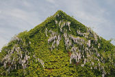 House detail with Chinese Wisteria — Stock Photo