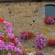 House wall with flowers, Brittany — Stock Photo