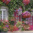 House with flowers, Brittany, France - Stock Photo