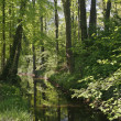 Little brook in spring, Germany — Stock Photo #1729153