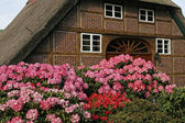 Timbered house with azaleas in Germany — Stock Photo