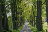 Alley with trees, Lower Saxony, Germany — Stock Photo