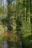 Little brook in spring, Germany — Stock Photo