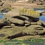 Rocky coastline, Brittany, France — Stock Photo #1747983