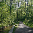 Forest footpath with brook, Germany — Stock Photo