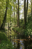 Little Duete river in Germany — Stock Photo