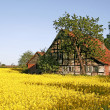 Timbered house with rape field in spring - Stock Photo