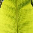 Palm leaf, backlight — Stock Photo