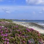 Beach near Santa di Gallura, Sardinia — Stock Photo