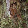 Bark of a deciduous tree - Stock Photo