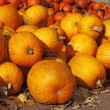 Pumpkin (Cucurbit) harvest in autumn — Stock Photo #2003785