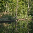 Pond in spring with water reflection — Stock Photo