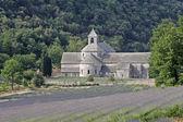 Abbaye Notre-Dame de Senanque, France — Stock Photo
