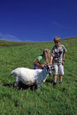 Two children with sheep, Skye, Scotland — Stock Photo