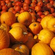 Stock Photo: Pumpkin (Cucurbit) harvest in autumn