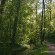 Stock Photo: Forest footpath, little brook in Germany