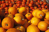 Pumpkin (Cucurbit) harvest in autumn — Stock Photo