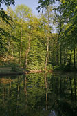 Pond with water reflection in Germany — Stock Photo
