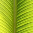 Palm tree, detail of leave by back-light - Stock Photo