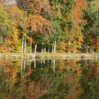 Pond with water reflection in autumn — Stock Photo