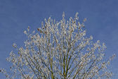 Tree with hoar-frost in Winter — Stock Photo