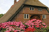 House with straw roof and Azaleas — Stock Photo