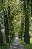 Alley with trees in Lower Saxony, German — Stock Photo