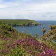 Rocky coastline with heath near Gwithian - Photo
