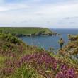 Rocky coastline with heath near Gwithian — Stock Photo #2205177